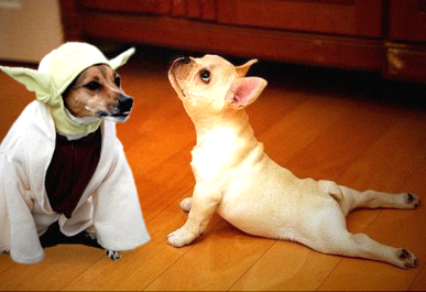 Yoda-and-Yoga-Dogs2